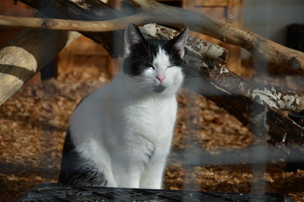 kotek w schronisku